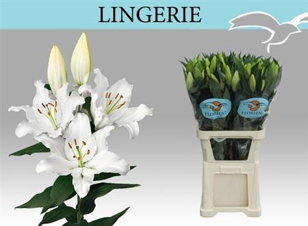 LYS OR LINGERIE 95 2 F+