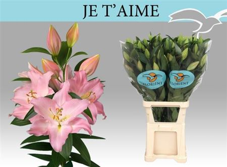 LYS OR JETAIME 100 4 F+