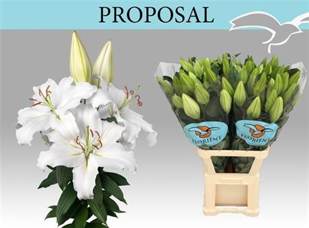 LYS OR PROPOSAL 85 2 F+